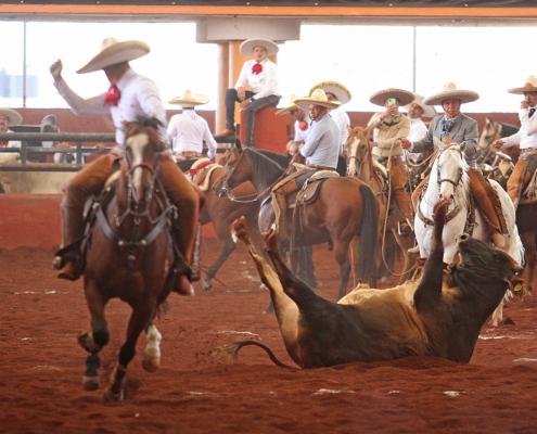 Juan Israel Estrada de Regionales de Peribán abanicando al toro en su primera pasada de colas